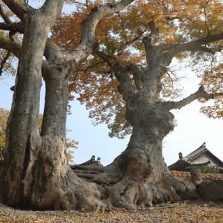 연리근의 가을