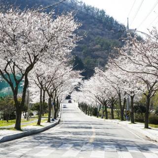 두륜산의 봄